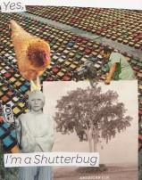 Shutterbug by Liam Kennedy